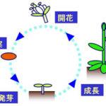葉のつくりとつき方(植物)/差がつくポイントは5つ!―「中学受験+塾なし」の勉強法