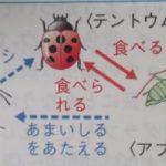 昆虫どうしの関係(天敵・共生・寄生)と鳴き声―「中学受験+塾なし」の勉強法